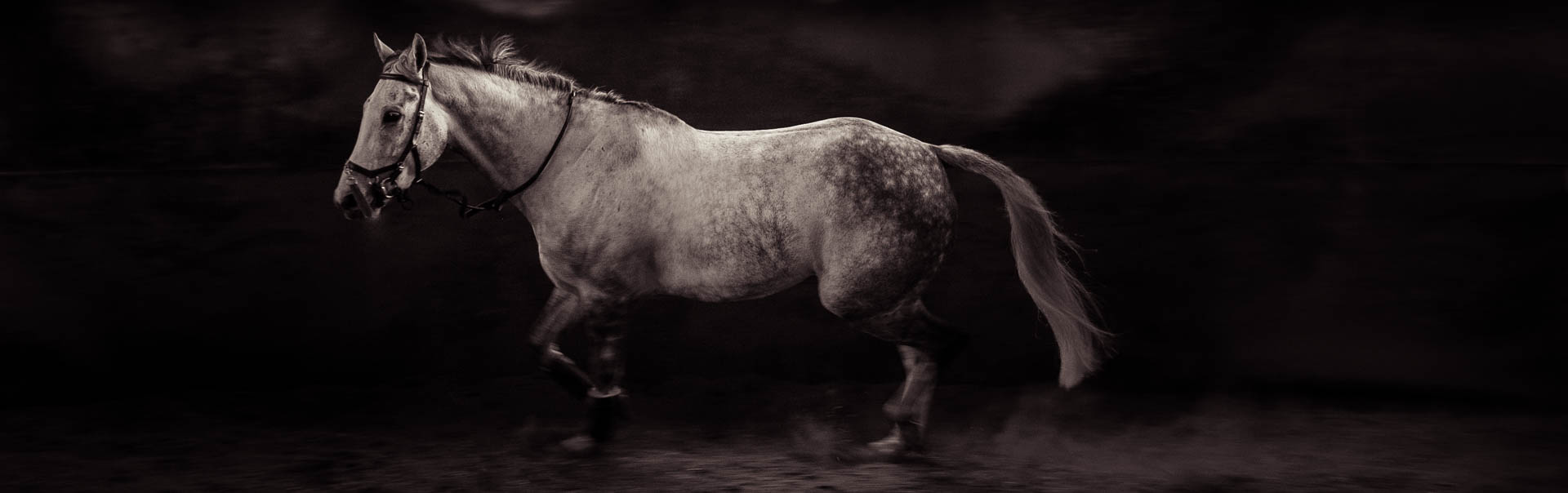 Commercial and equine photography Ireland